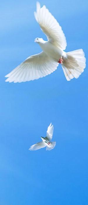introduzione - palomba bianca